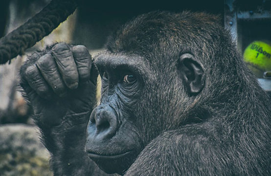 19 Days Uganda Gorillas & Wildlife Experience
